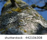 yellow lichen on a tree close up   Shutterstock . vector #442106308