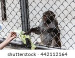 Visitors Feed Monkeys In A...
