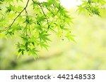 leaf | Shutterstock . vector #442148533