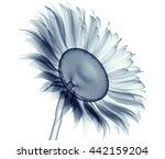 x ray image of a flower ... | Shutterstock . vector #442159204