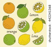 citrus fruits vector collection ... | Shutterstock .eps vector #442241368