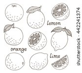 set of vector citrus fruits ... | Shutterstock .eps vector #442241374
