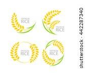 fresh rice vector | Shutterstock .eps vector #442287340