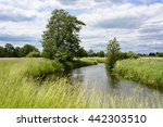 Bystrzyca River And Green...