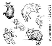 sketchy style drawn vector set... | Shutterstock .eps vector #442314718