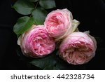 three flowers of beautiful... | Shutterstock . vector #442328734