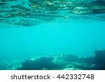 underwater texture and fauna in ... | Shutterstock . vector #442332748