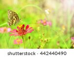 butterfly fly on flower and...   Shutterstock . vector #442440490