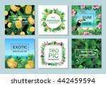 tropical cards collection.... | Shutterstock .eps vector #442459594
