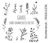 vector set wild grass  drawing... | Shutterstock .eps vector #442611256