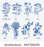hand drawn set of herbs  ... | Shutterstock .eps vector #442700650