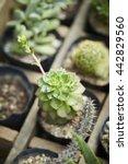 cacti | Shutterstock . vector #442829560