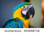bird macaw have multiple color... | Shutterstock . vector #442848718