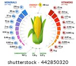 vitamins and minerals of corn... | Shutterstock . vector #442850320