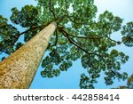 Green Big Tree With Blue Sky