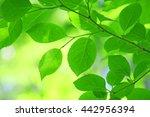green leaves | Shutterstock . vector #442956394