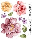 watercolor illustration flower... | Shutterstock . vector #442979356