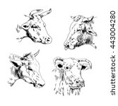 bull painted in a graphic style ... | Shutterstock .eps vector #443004280