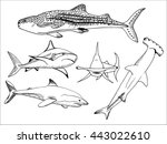Vector set of sketch illustration of different types of sharks, whale shark, white shark, hammerhead shark, round nose shark