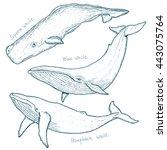 Whales Set Humpback Whale Blue...
