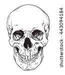 hand drawn line art... | Shutterstock .eps vector #443094184