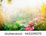 Sun Shower In Flower Garden....