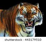 Tiger Roars Drawing On Black...