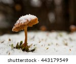 Mushroom On A Snowy Meadow
