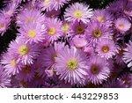 flowers | Shutterstock . vector #443229853