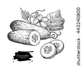 cucumber hand drawn vector.... | Shutterstock .eps vector #443240800