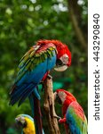 colorful macaws standing on log   Shutterstock . vector #443290840