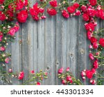 Beautiful Garden Red Roses On...