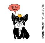 dog french bulldog queen fun... | Shutterstock .eps vector #443311948