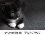 Small Black Fluffy Kitten With...