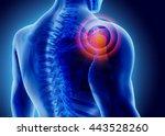 3d illustration of shoulder...