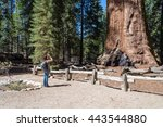 woman takes a picture of  giant tree, Sequoia National Forest  - stock photo