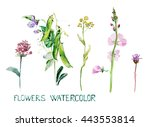 set flowers. summer grass.... | Shutterstock . vector #443553814