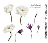flowers and leaves  watercolor  ...   Shutterstock . vector #443582260