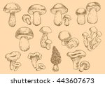 edible mushrooms with fresh... | Shutterstock .eps vector #443607673