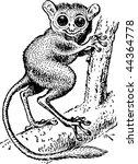 alien,animal,asia,asian,big,bohol,branch,bug-eyed,cling,cuddly,cute,ears,endangered,ewok,eyes