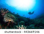 silhouette of a diver above the ... | Shutterstock . vector #443669146
