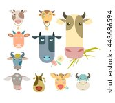 Cows Portraits Icon Image...