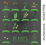 vector illustration of a plant  ... | Shutterstock .eps vector #443697958