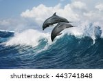 a pair of beautiful dolphins... | Shutterstock . vector #443741848