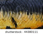 Whale baleen - stock photo