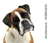Stock photo nice young mixed breed dog in the photo studio 443852653