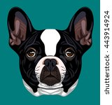 portrait of a french bulldog | Shutterstock .eps vector #443914924