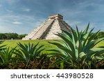 aloe vera grow near the ancient ... | Shutterstock . vector #443980528