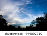 Silhouette Forest Trees With...