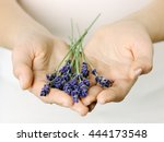 female hands with lavender | Shutterstock . vector #444173548
